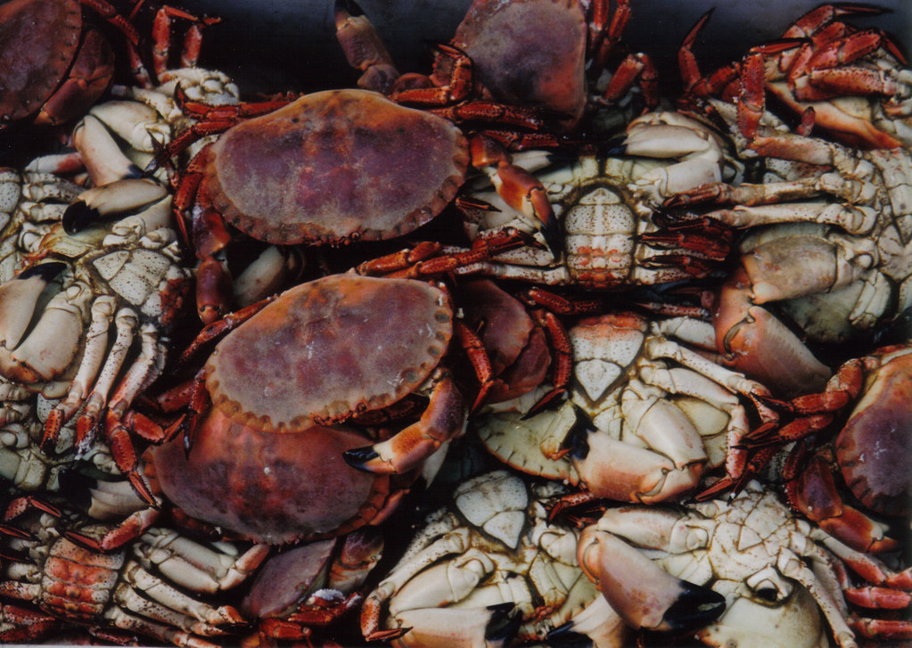 Seafood and Scones: The pick of Cornwall's culinary heritage